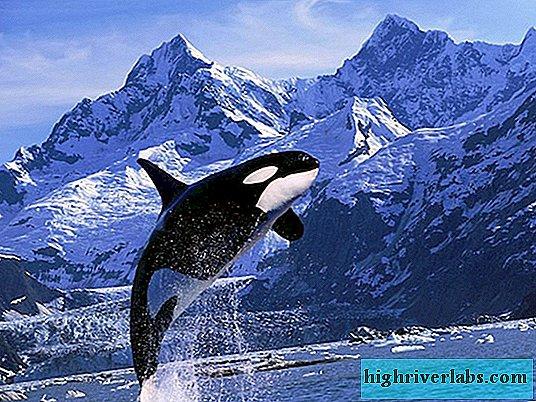 Nario dydis banginiuose