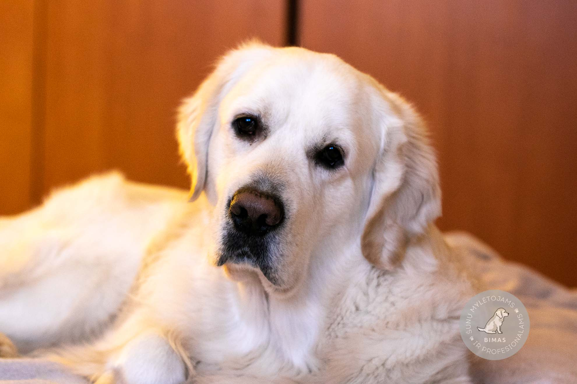 Kas yra suns nario dydis Kaip padidinti Pisyun greitai