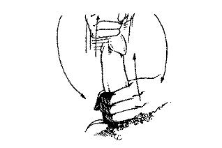 Masazai padidins nari Koks yra normalus nario dydis 16